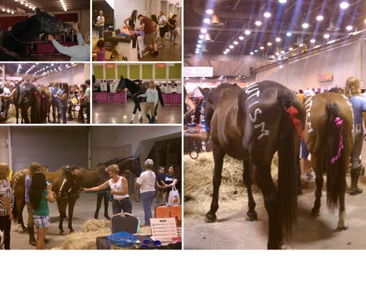 Horse Boy Foundation Activities 2011